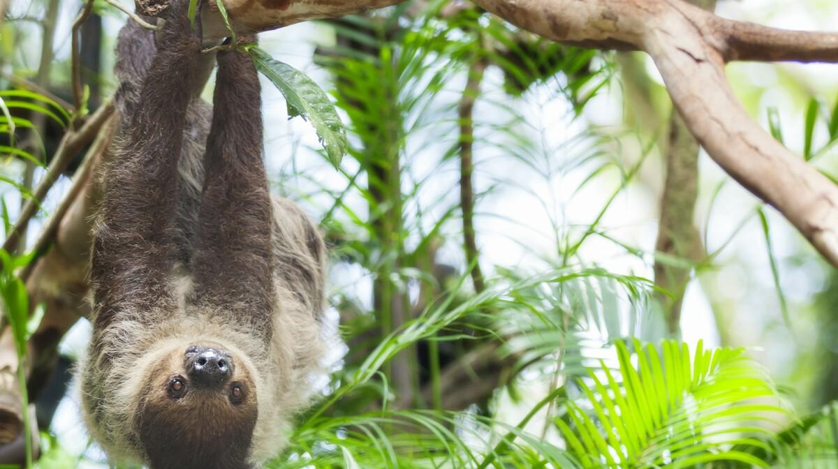 Kostarika - ljenivac