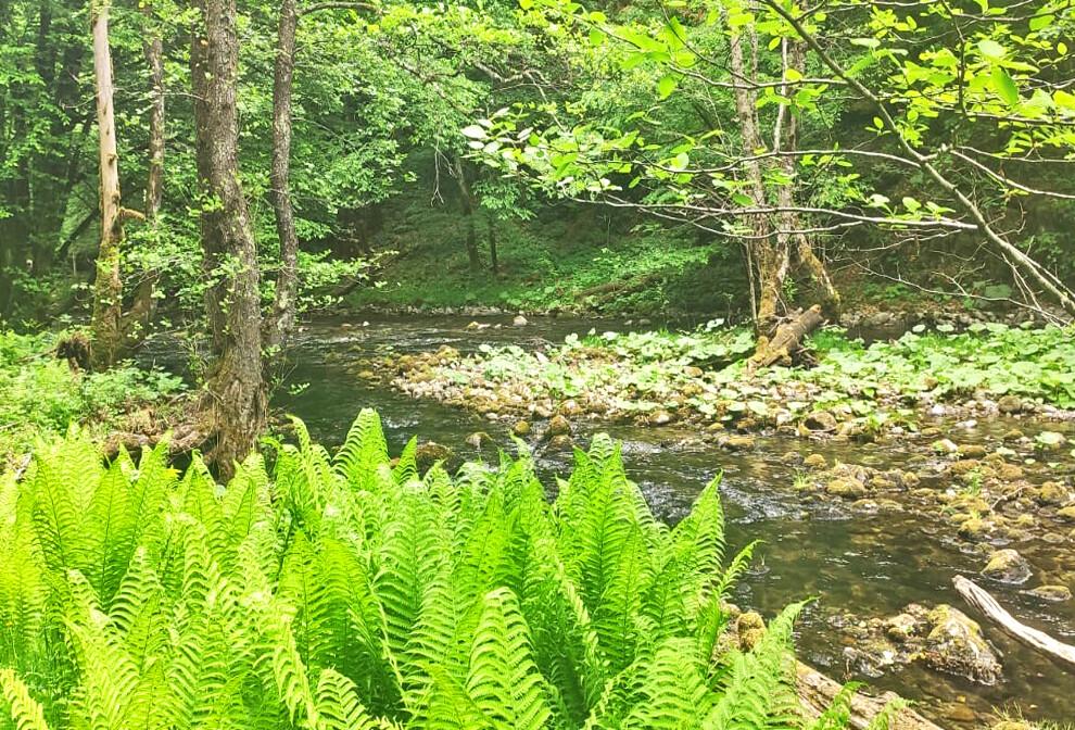 Gorski kotar, Skrad, ljepota šume i potoka, grupni polasci, putovanje autobusom