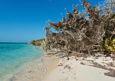 Bahami, Coco Cay