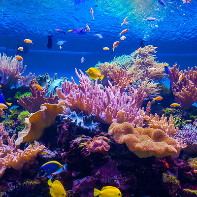 Egipat, Hurgada, koraljni greben sa tropskim ribama, putovanje zrakoplovom, ljetovanje na mediteranu