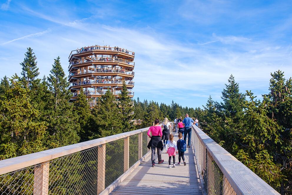 Šetnja među krošnjama, putovanje u Sloveniju