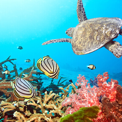 ronjenje na Tajlandu, putovanja zrakoplovom, Mondo travel, daleka putovanja, garantirani polazak