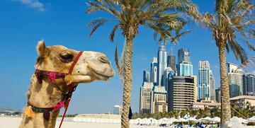 slika deve, Putovanje u Dubai, Emirati, grupni polasci, daleka putovanja