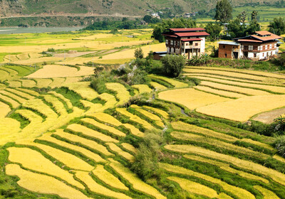 Butan, Punakha, rižina polja, putovanje u Butan, grupni polasci, garantirani polasci