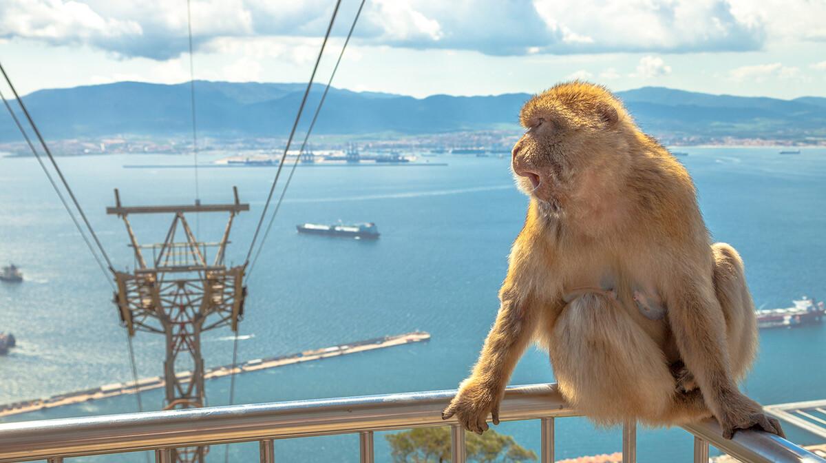 Majmun u Gibraltaru, putovanje u Andaluziju