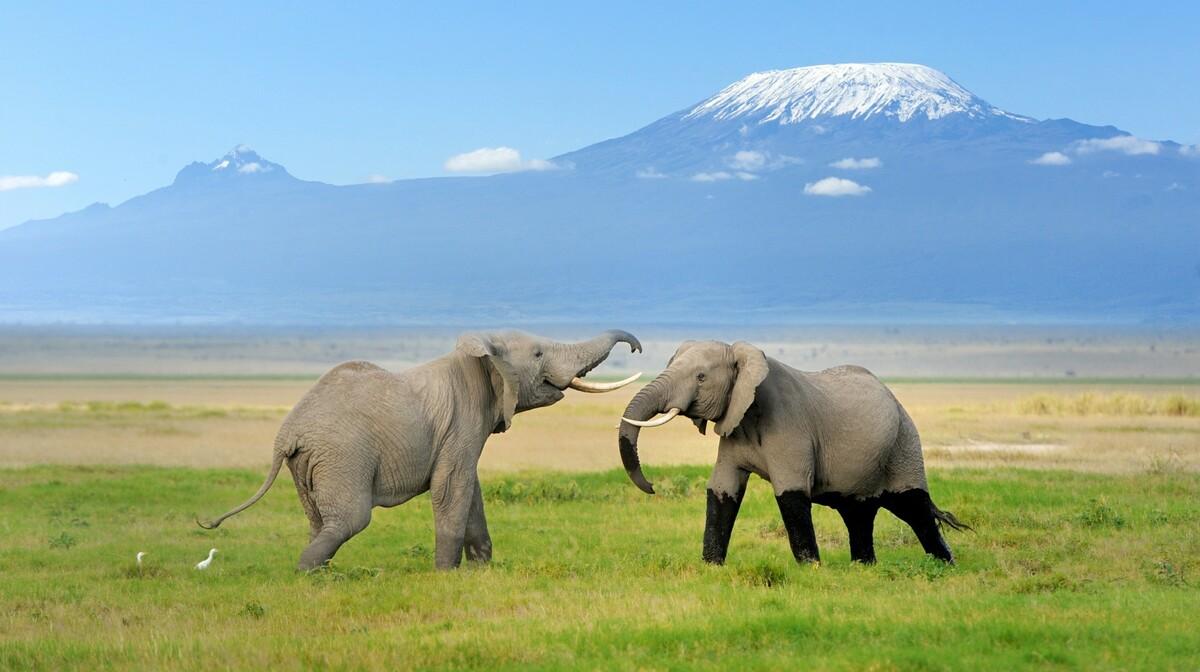 Tanzanija i Zanzibar - divlji život