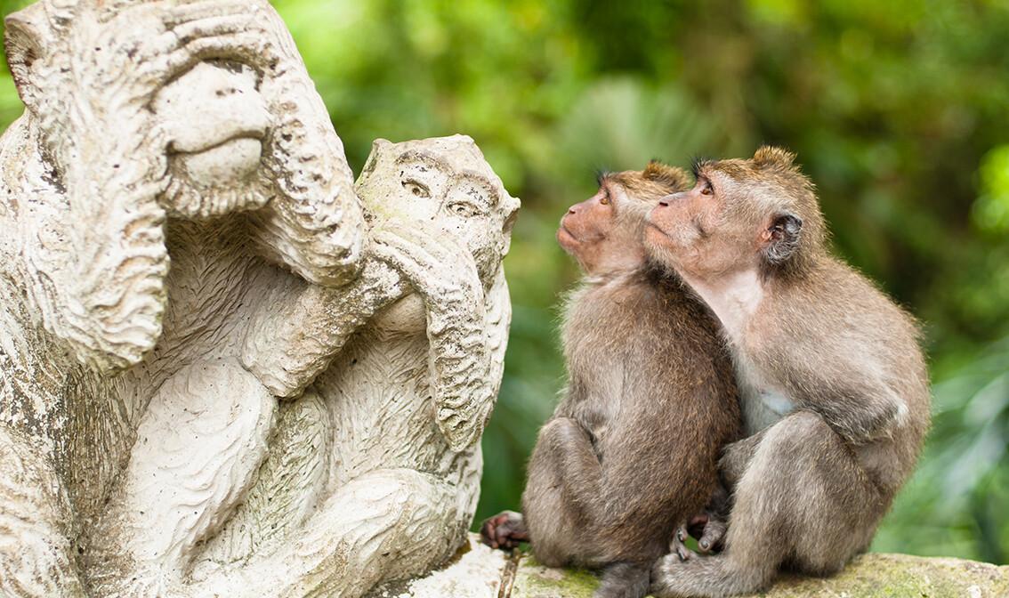 Makaki majmuni, putovanja zrakoplovom, Mondo travel, daleka putovanja, garantirani polazak