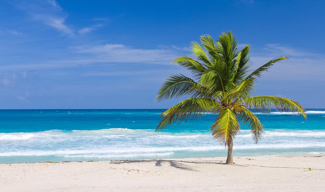 Pješčana plaža sa palmom, odmor Dominikanska republika, karibi, odmor iz snova, daleka putovanja