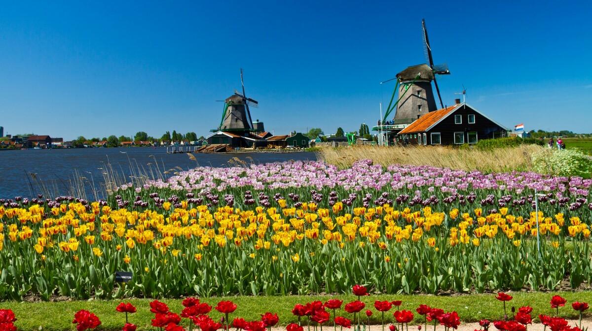 Polja šarenih tulipana,  putovanje u Amsterdam i mala nizozemska tura