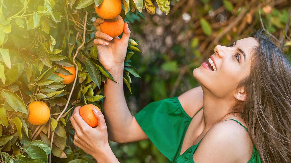 Mandarine, berba