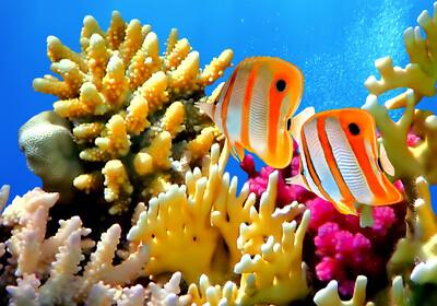 koraljni rezervat Eilat izrael putovanje