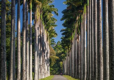 Šri Lanka, Kandy, botanički vrt Peradeniy