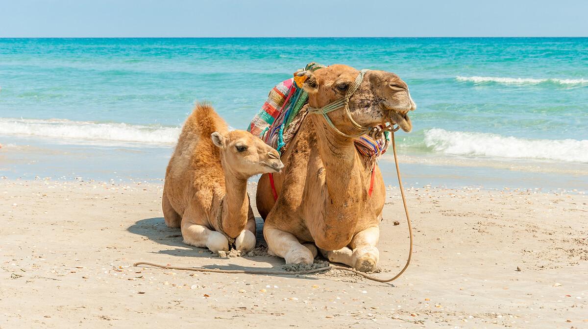 Deva na plaži, ljetovanje Tunis, mediteran, let posebnim zrakoplovom za tunis, garantirani polasci