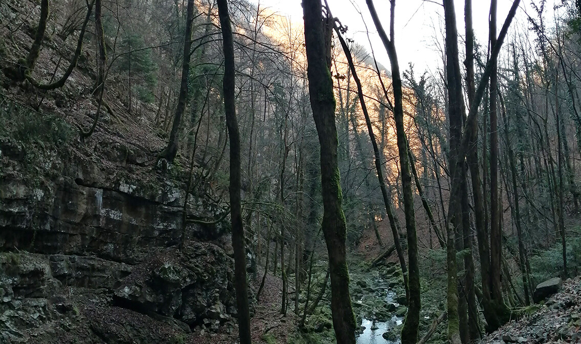 Gorski kotar, Zeleni Vir, pogled na šumu i potok, grupni polasci, putovanje autobusom
